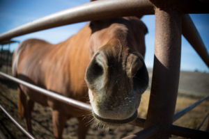 Free-Rein-Foundation-Horse-Fence
