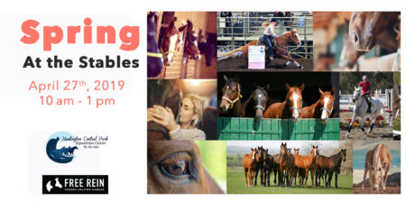 Spring-at-the-stables