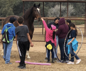Free-Rein-Foundation-Equine-therapy-program