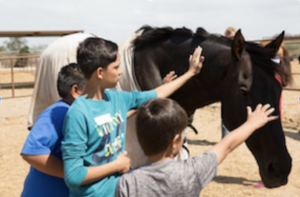 Free-Rein-Kids-Equine-Therapy