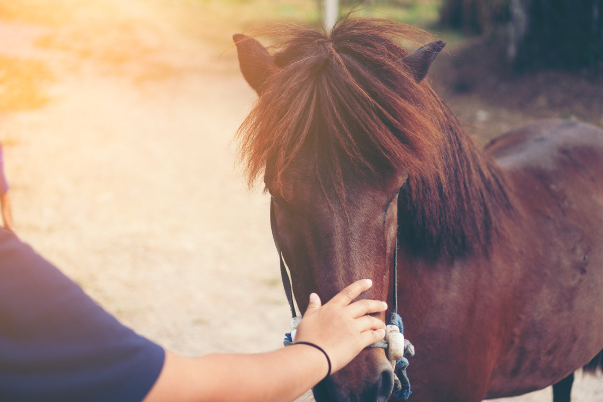 Picturing Horses Helping Humans