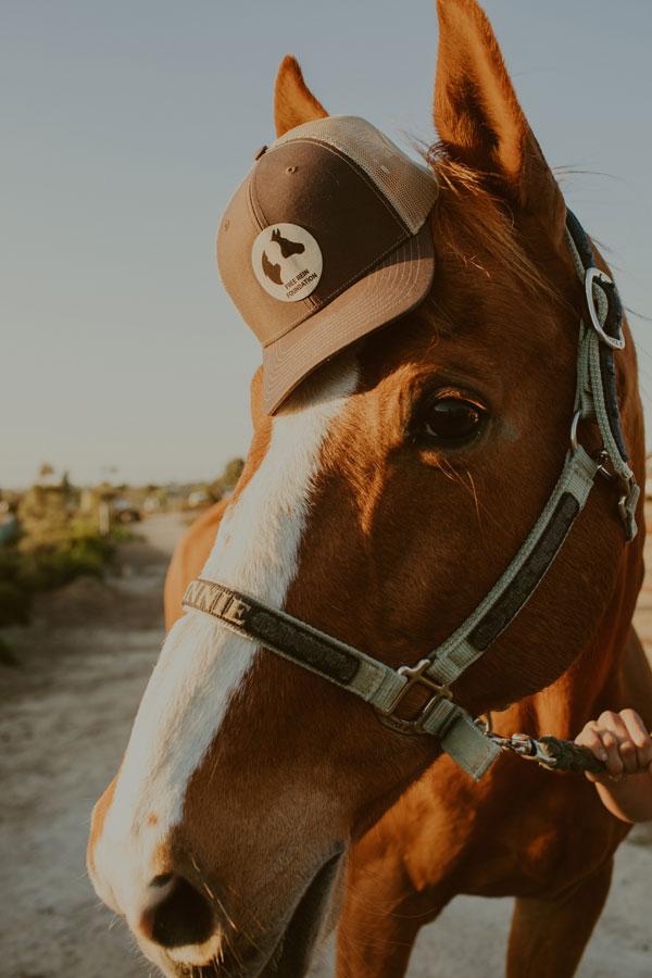Trucker Hat on horse